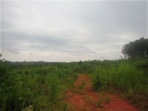 UNDER CONTRACT!  98 Acres of Hunting and Investment Land For Sale in Charlotte County VA!