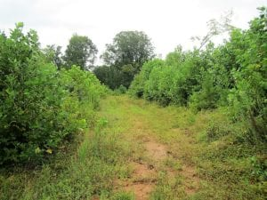 UNDER CONTRACT!  66 Acres of Hunting and Investment Land for Sale in Charlotte County VA!