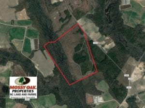 SOLD!  215 Acres of Prime Hunting Land For Sale in Robeson County NC!