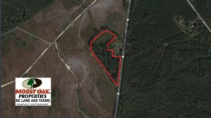 SOLD!  10 Acres of Hunting and Timber Land For Sale in Halifax County NC!