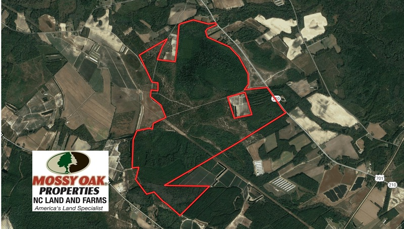 SOLD!  930 Acres of Hunting and Timber Land for Sale in Bladen County NC!