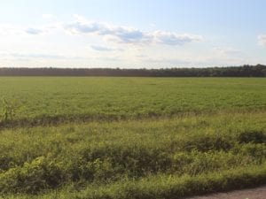 UNER CONTRACT!  5 Acres of Residential Hunting Land For Sale in Southampton County VA!