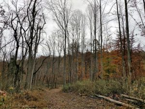 UNDER CONTRACT!  93 Acres of Hunting Land For Sale in Rockbridge County VA!