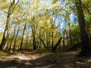 UNDER CONTRACT!  196.4 Acres of Residential and Timber Land For Sale in Edgecombe County NC!