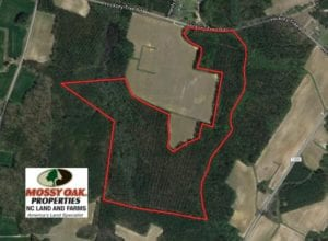SOLD!  72 Acres of Hunting and Managed Timber Land For Sale in Northampton County NC!