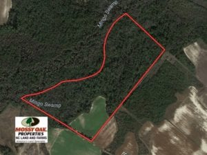 SOLD!  65 Acres of Hunting and Farm Land For Sale in Sampson County NC!