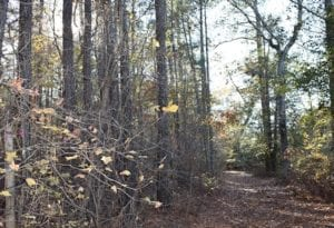 UNDER CONTRACT!  34.116 Acres Of Open Timber Land For Sale in Southampton County VA!