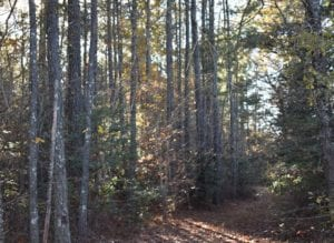 UNDER CONTRACT!  34.114 Acres of Open Timber Land For Sale In Southampton County VA!