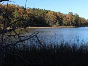 UNDER CONTRACT!  12.7 Acres of Residential Hunting Land For Sale in Isle of Wight County VA!