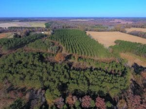SOLD!  70.53 Acres of Hunting and Timber Land For Sale in Edgecombe County NC!