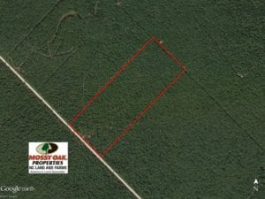 SOLD!  60 Acres of Bear and Deer Hunting Land For Sale in Hyde County NC!