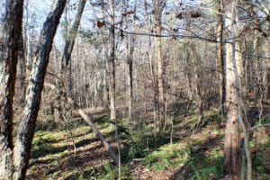 UNDER CONTRACT!  16.60 Acres of Hunting and Recreational Land For Sale in Cumberland County VA!