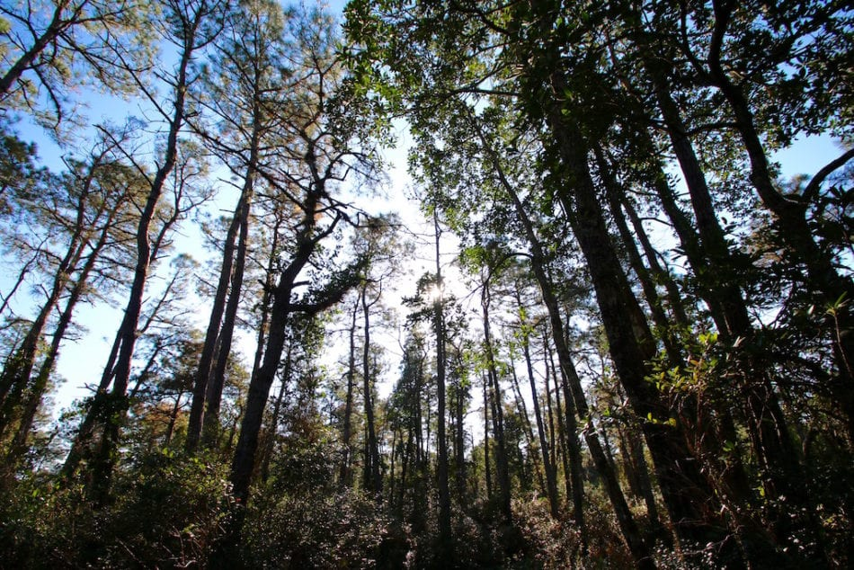 SOLD! 60 Acres of Bear and Deer Hunting Land For Sale in Hyde County