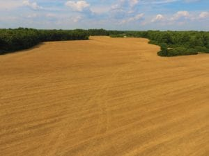 SOLD!  36.69 Acres of Farm and Timber Land For Sale In Edgecombe County NC!