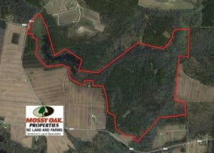 UNDER CONTRACT!  289 Acres of Hunting and Timber Land For Sale in Tyrrell County NC!
