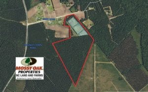 SOLD!  49.82 Acres of Hunting Land with Duck Impoundments For Sale in Columbus County NC!
