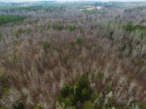 SOLD!  170 Acres of Recreational Hunting Land For Sale in Charlotte County VA!