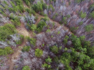UNDER CONTRACT!  170 Acres of Recreational Hunting Land For Sale in Lunenburg County VA!