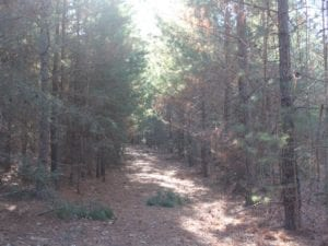 UNDER CONTRACT!  55 Acres of Hunting and Recreational Land For Sale in Caroline County VA!