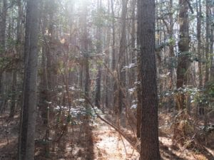 UNDER CONTRACT!  9.4 Acres of Residential and Hunting Land For Sale in King William County VA!