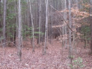 UNDER CONTRACT!  16.7 Acres of Hunting Land For Sale in Southampton County VA!