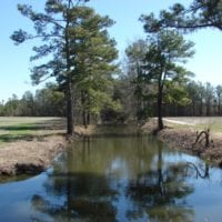 REDUCED!  36 Acres of Farm and Timber Land For Sale in Robeson County NC!