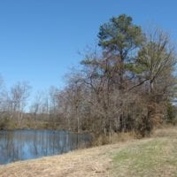 REDUCED!  50 Acres of Farm and Timber Land For Sale in Robeson County NC!
