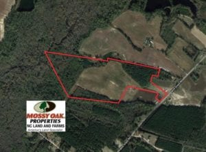 UNDER CONTRACT!  50 Acres of Farm and Timber Land For Sale in Robeson County NC!