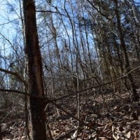 10 Acres Of Hunting Land For Sale In Escounty Va