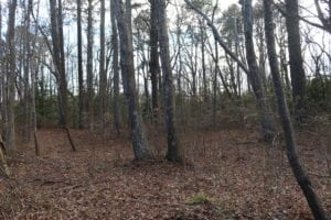 UNDER CONTRACT!  40 Acres of Residential Hunting Land For Sale in Accomack County VA!
