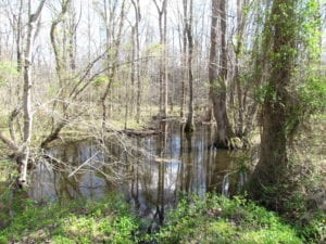 UNDER CONTRACT!  62 Acres of Residential Timber Land For Sale in Greensville County VA!