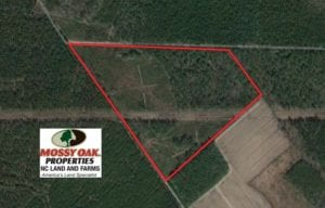 SOLD!  55.92 Acres of Timber and Hunting Land For Sale in Pamlico County NC!