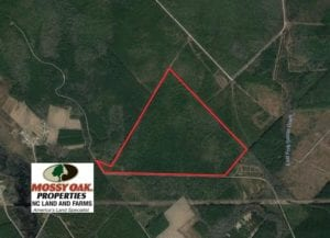 SOLD!  189.85 Acres of Timber and Hunting Land For Sale in Pamlico County NC!