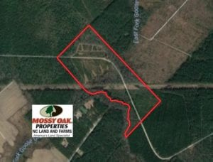 SOLD!  75.9 Acres of Timber and Hunting Land For Sale in Pamlico County NC!