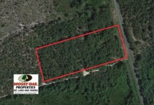 SOLD!  4 Acres of Hunting and Timber Land for Sale in Scotland County NC!