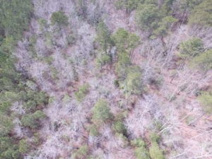 UNDER CONTRACT!  31 Acres of Hunting & Investment Land for Sale in Gloucester County VA!