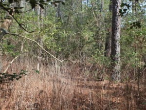 UNDER CONTRACT!  16 Acres of Hunting and Investment Land for Sale in Gloucester County VA!