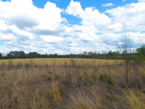UNDER CONTRACT!  150 Acres of Farm and Hunting Land For Sale in Sussex County VA!