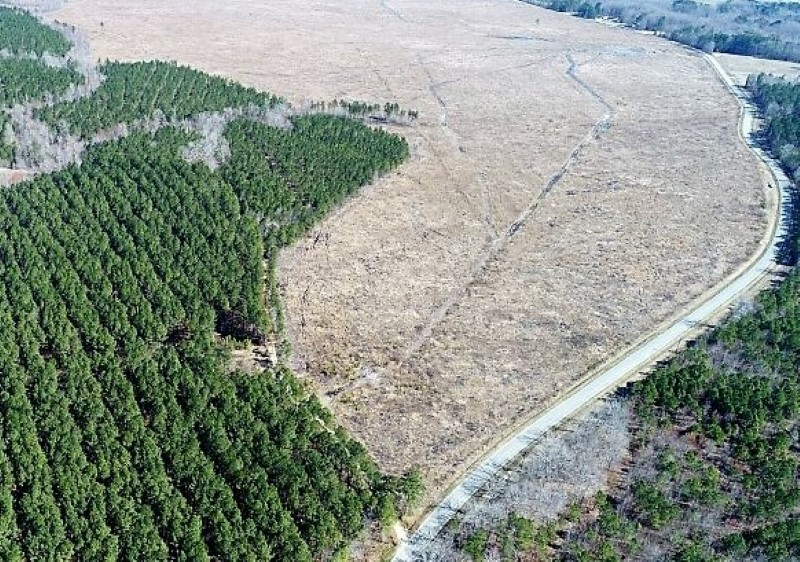 SOLD!  171 Acres of Timber Land For Sale In Halifax County NC!