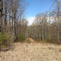 99 Acres of Hunting Land for Sale in Rockbridge County VA!