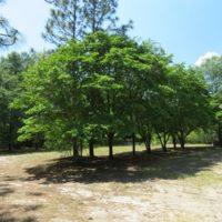 UNDER CONTRACT!  1.33 Acres with Home For Sale in Sampson County NC!