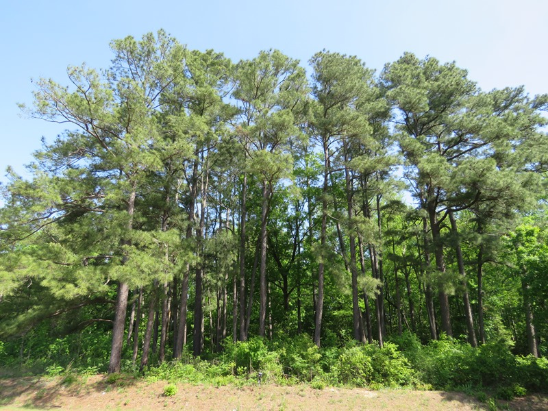 UNDER CONTRACT! 91 Acres of Farm and Timber Land For Sale in