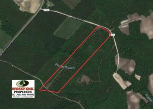 SOLD!  26.7 Acres of Hunting and Timber Land For Sale in Jones County NC!