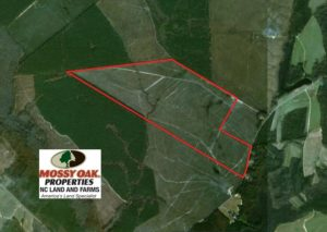UNDER CONTRACT!  219 Acres of Timber Land For Sale In Halifax County NC!