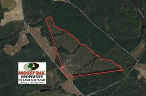 SOLD!  104.8 Acres of Hunting Land For Sale in Halifax County NC!