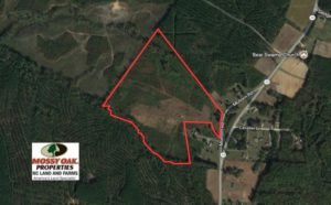 SOLD!  50.77 Acres of Hunting Land For Sale in Halifax County NC!