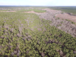 UNDER CONTRACT!  196 Acres of Hunting Land for Sale in Sussex County VA!