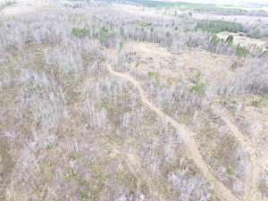 SOLD!  20 Acres of Prime Hunting and Recreational Land For Sale in Dinwiddie County VA!