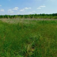 REDUCED! 102 Acres of Hunting Land For Sale in Halifax County NC!
