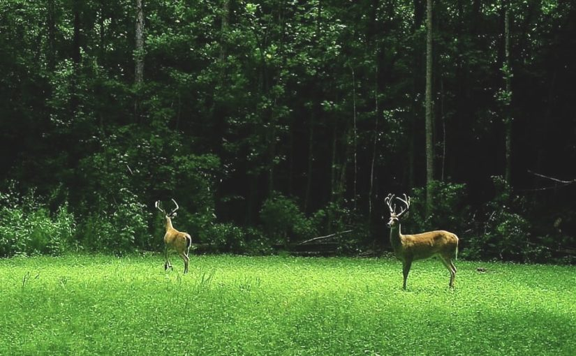 Are Food Plots Necessary?
